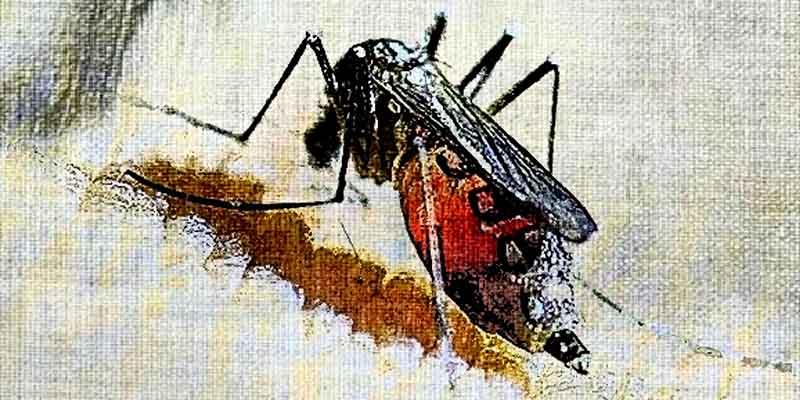 Комары - переносчики инфекции