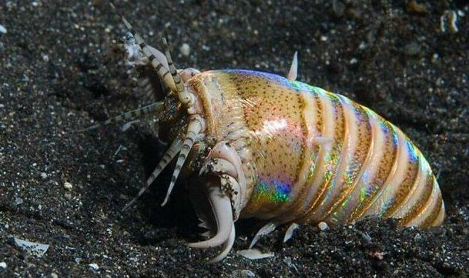Лучшие новости о огромном двухметровом черве, который 20 миллионов лет назад терроризировал моря Евразии.