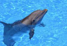 Лучшие новости о дельфинах-роботах