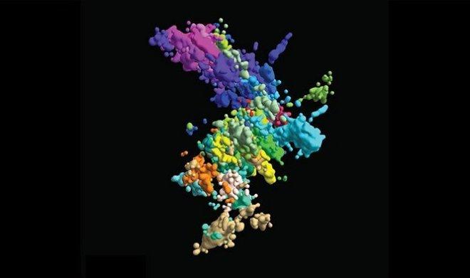 Лучшие новости о настоящих хромосомах, не похожих на X и Y.