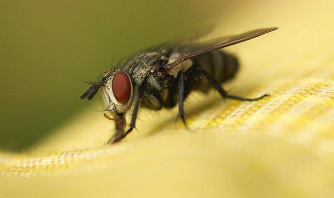Лучшие новости о способности мух избегать смертельного удара.