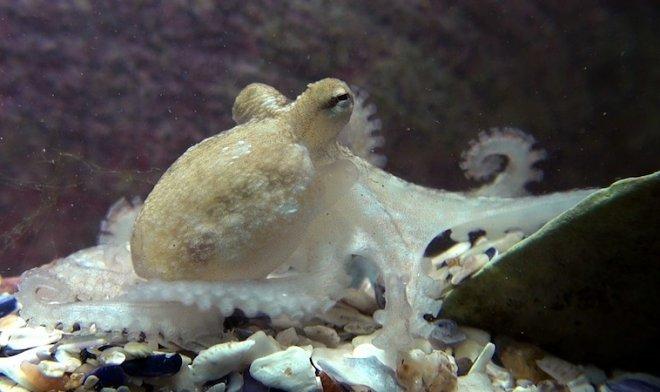 Лучшие новости: осьминоги и рыбы-компаньоны