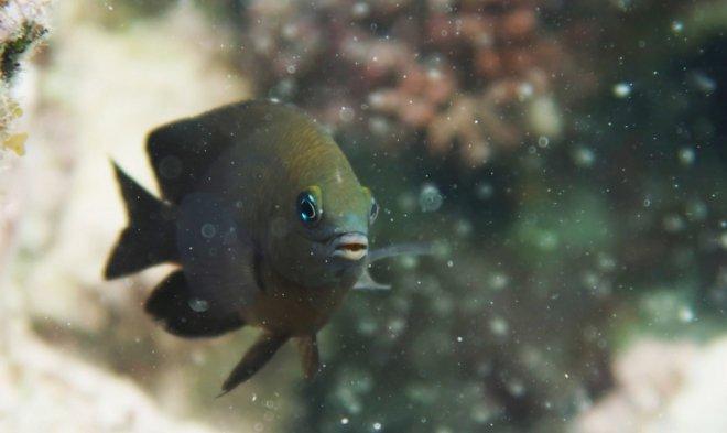 Лучшие новости о новой находке ученых - рыба, которая одомашнивает других существ