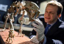 Лучшие новости о саблезубом тигре возрастом 37 миллионов лет