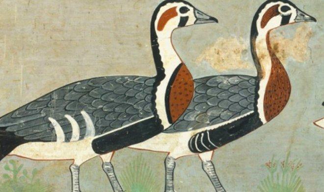 Лучшие новости о вымершем виде гусей, изображенном на древнеегипетских фресках