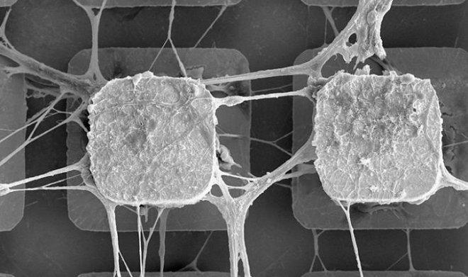 Лучшие новости о внедрении живых нейронов в компьютерные микрочипы