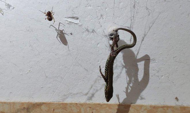 Лучшие новости о способностях пауков-тенетников