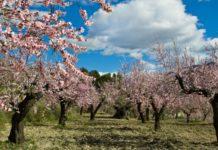 Лучшие новости об альтернативе пестицидам CropCoat