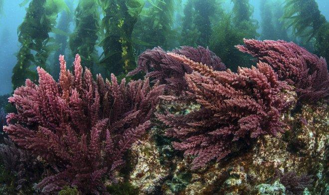 Лучшие новости о диете из красных водорослей