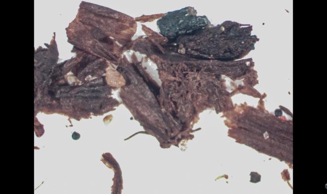Лучшие новости о находке окаменелых древних растений
