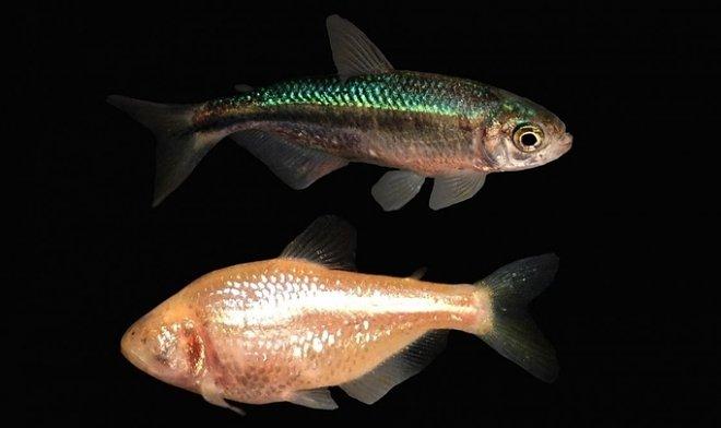 Лучшие новости о разведении рыб на Луне