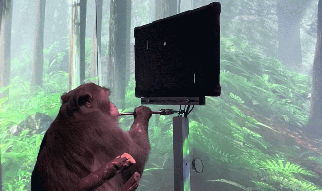 обезьяну