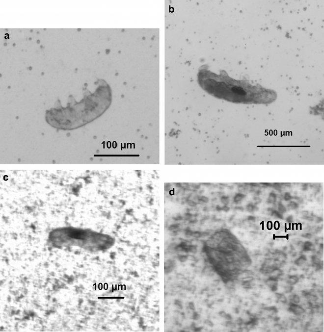 Лучшие новости о проверке теории панспермии с помощью тихоходок