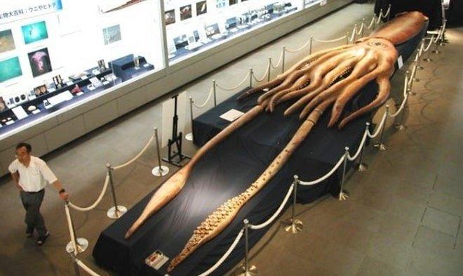 Лучшие новости о видеосъемке охоты на гигантского глубоководного кальмара