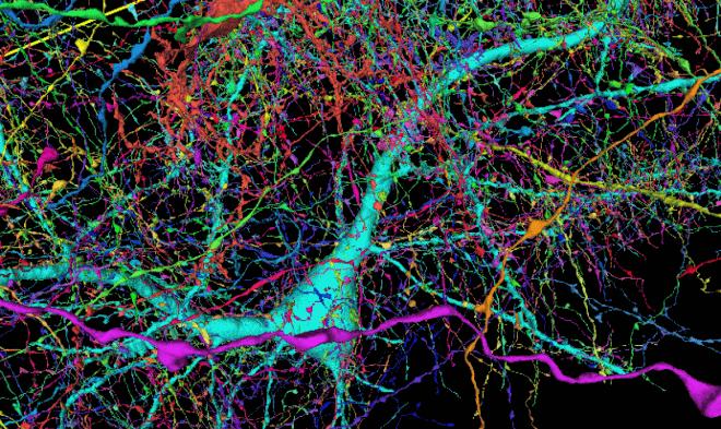 Лучшие новости о составлении карты мозга человека