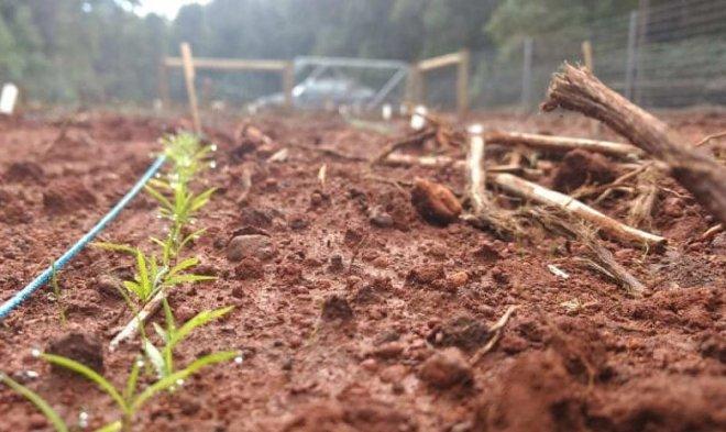 Лучшие новости об использовании аспирина для стимуляции роста растений