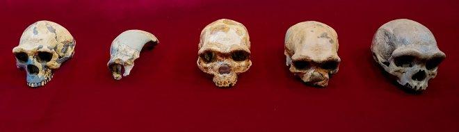 Лучшие новости: ближайший предок человека