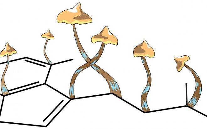 Лучшие новости об исследованиях псилоцибина