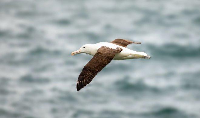 Лучшие новости об эффективности полета морских птиц