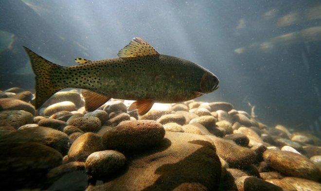 Лучшие новости о наркотической зависимости у рыб